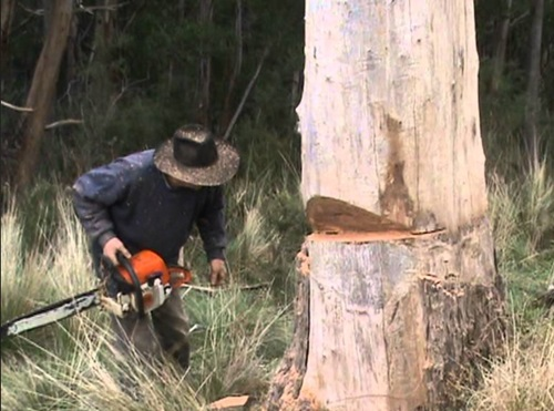 How to Prune and Fell a Tree